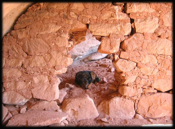 Picture of dog through an ancient pueblo wall in hidden canyon