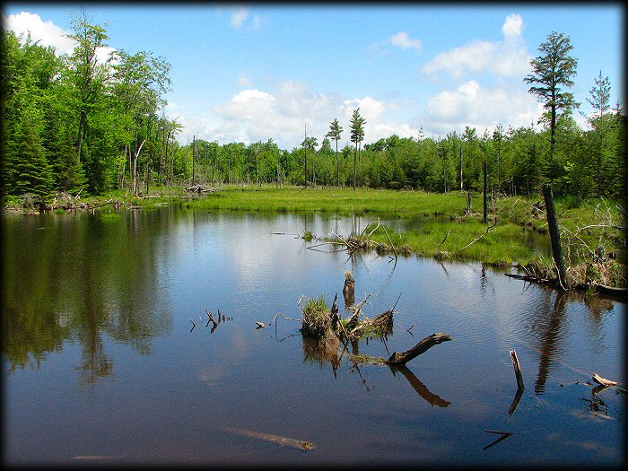 Typical moose pond in northern Maine